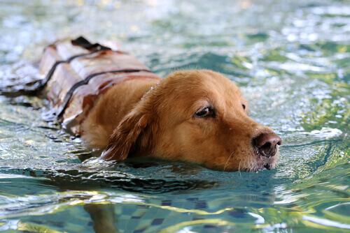 Водные опасности для собак
