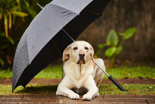 Что делать, если ваша собака отказывается выходить на улицу в дождливую погоду