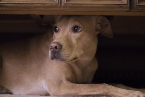Советы для домашних животных с шумовой фобией