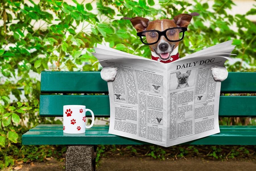 Perro con gafas y periódico leyendo noticias