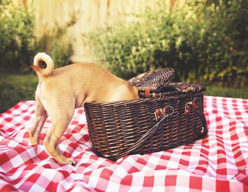 Consejos para hacer un picnic para perros