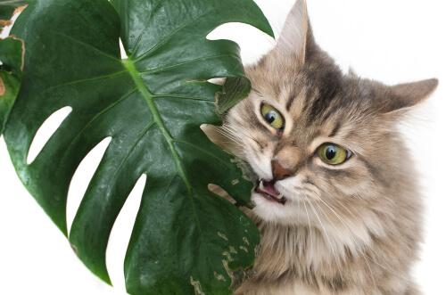 ¿Cuáles son las plantas más venenosas para las mascotas?
