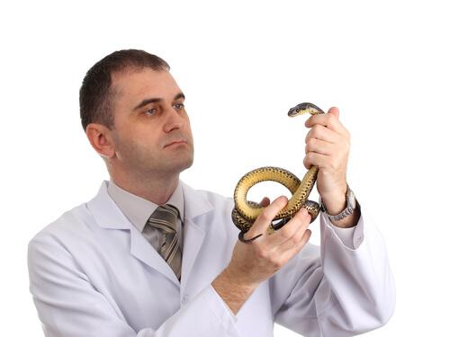Enfermedades que pueden transmitir los reptiles a los humanos