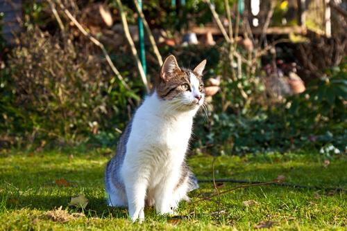 Pros y contras de que los gatos salgan