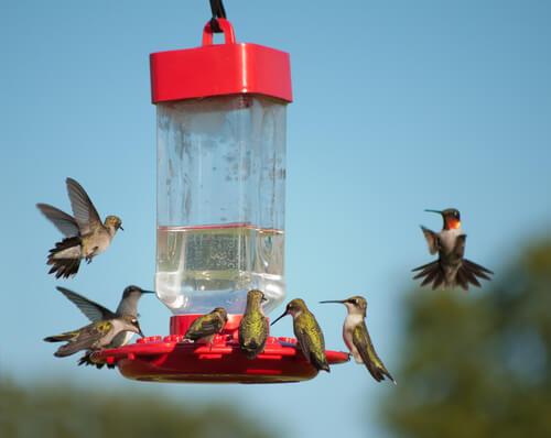 Qué colores atraen a los colibríes