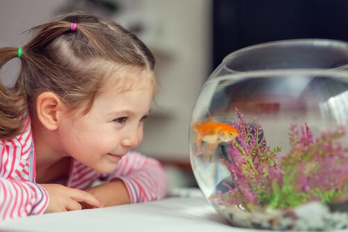 ¿Qué hacer con tus peces cuando limpies el acuario?