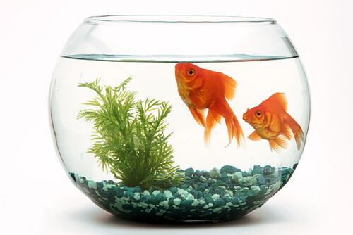 ¿Cómo es la reproducción del acuario?