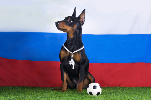 Silbato para perros