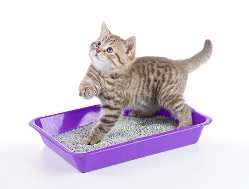 Síndrome urológico felino: síntomas y tratamiento