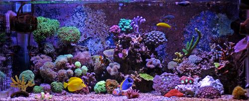 El sustrato ideal para tu acuario, ¿grava o arena?