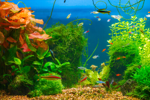 Sustrato para acuarios con plantas