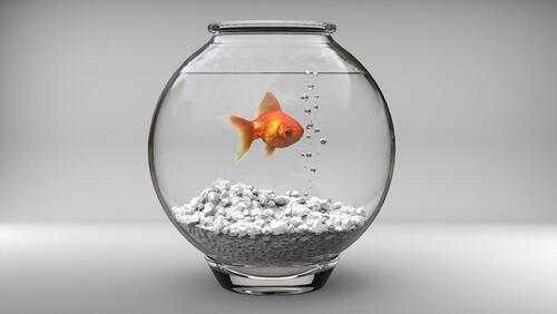 Sustrato para acuarios de peces