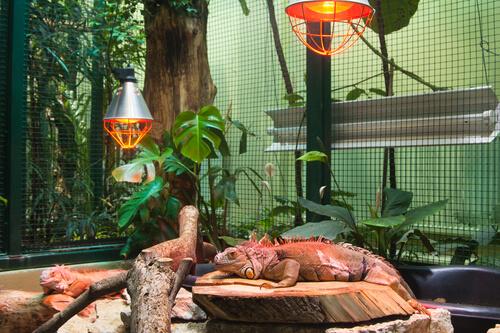 Cómo elegir el mejor sustrato para reptiles