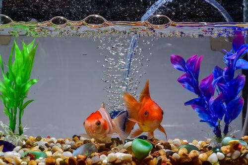 Temperatura del agua del acuario