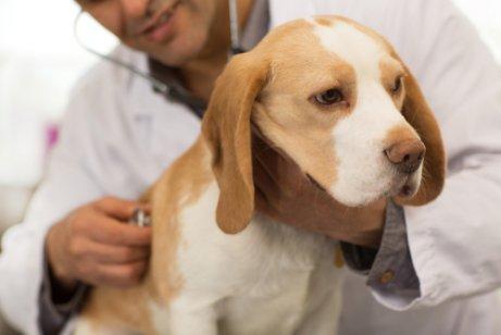 Resultado de imagen de tratamiento gusanos perros