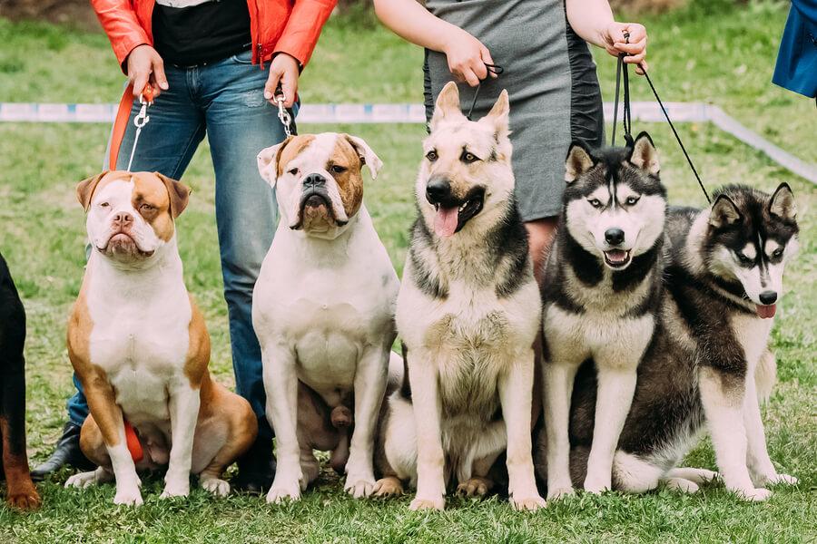 La genética determina la personalidad de los perros.