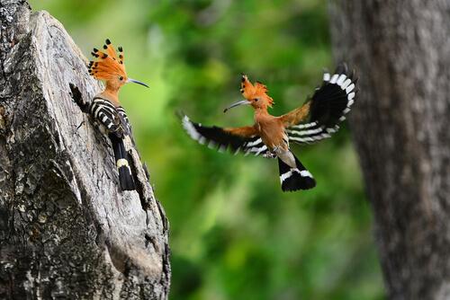 Algunas de las aves más curiosas del mundo