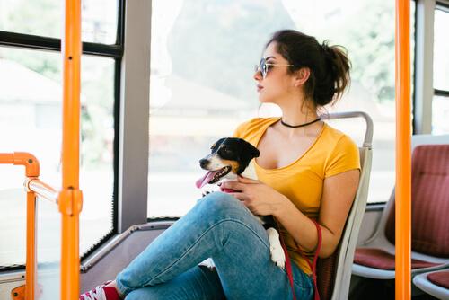 Animales en transporte público