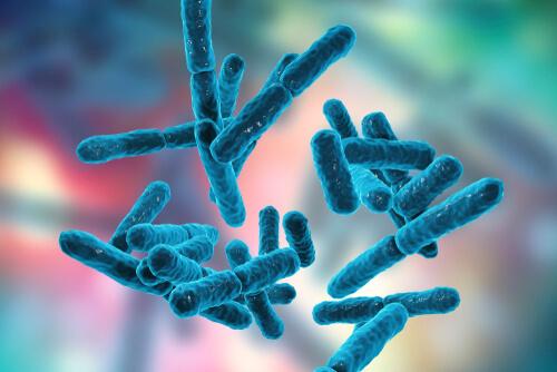 Bacteria Bifidobacterium
