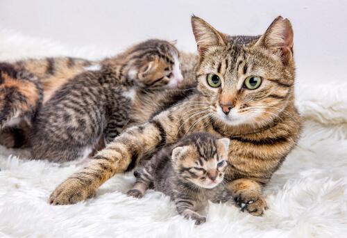 ¿Cuándo y cómo mudar la camada del gato?