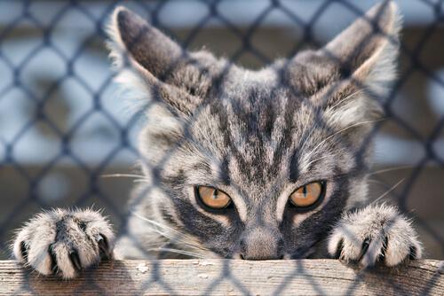 Las garras del gato: ¿para qué sirven?