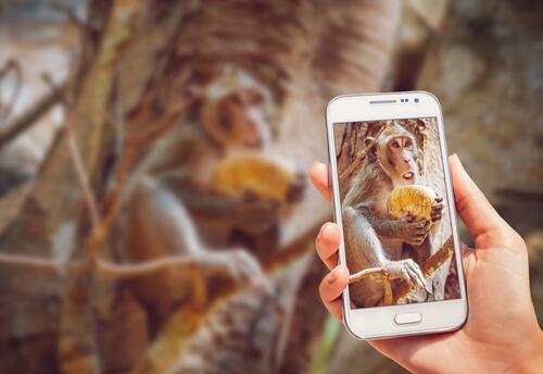¿Por qué no difundir el vídeo de un chimpancé usando el móvil?