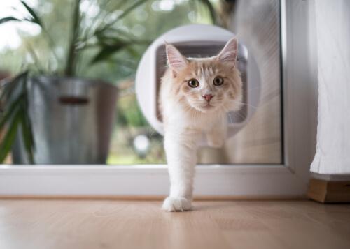 Clasificación de las puertas para gatos