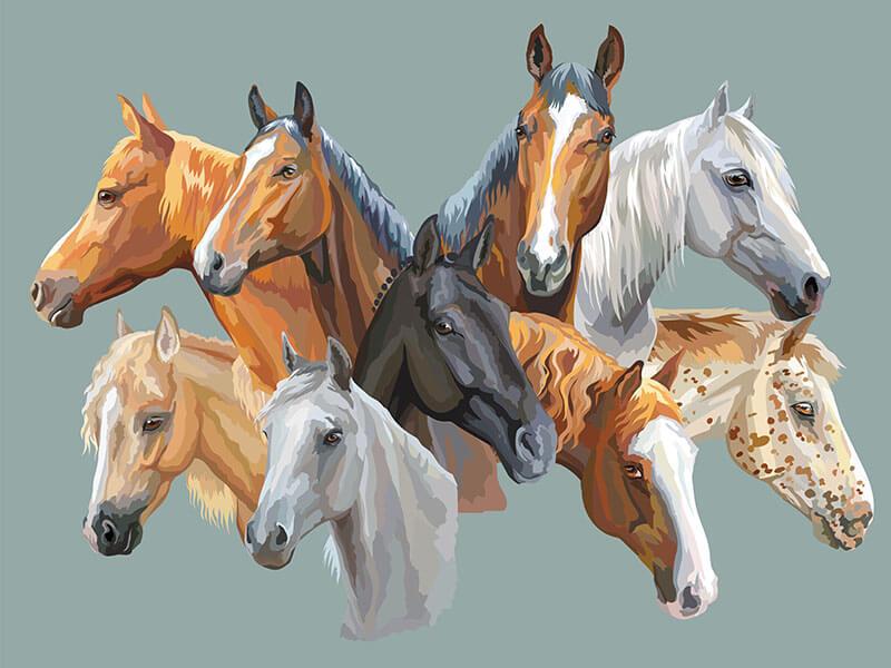 Colores en el pelaje de tu caballo