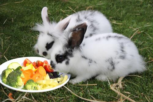 Comida para conejos