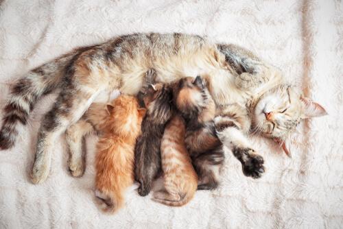 El destete en gatitos, ¿cómo proceder?