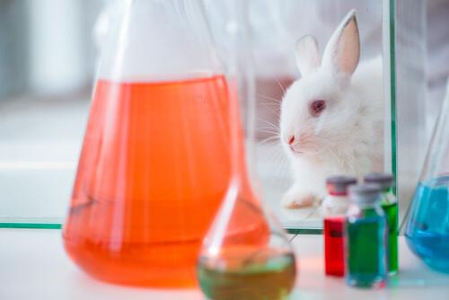 Experimentos en animales para cosméticos
