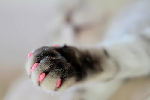 Fundas para uñas de gato