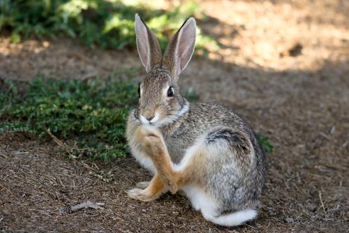 Garras de mi conejo