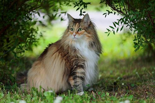 El gato del bosque, un animal todavía muy poco conocido