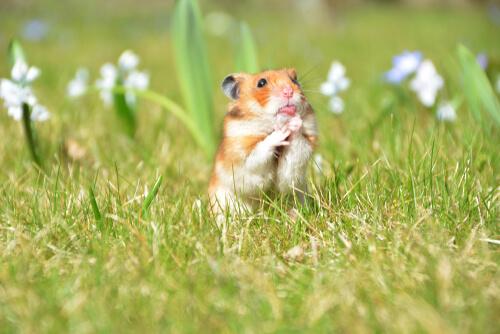 7 tips para crear un huerto para un roedor