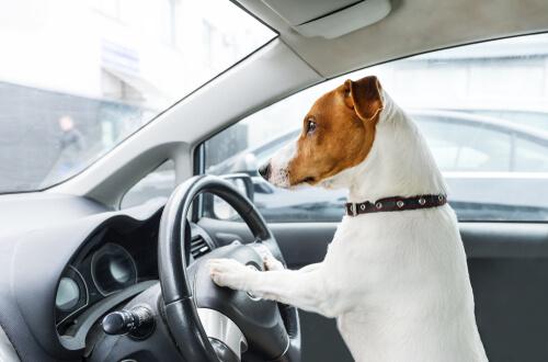 Normativa y posibles multas, ¿cómo llevar a tu mascota en el coche?