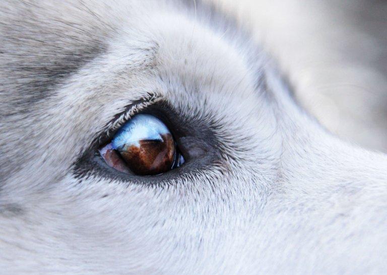 Papilomatosis canina tratamiento, Hpv high risk interp positive