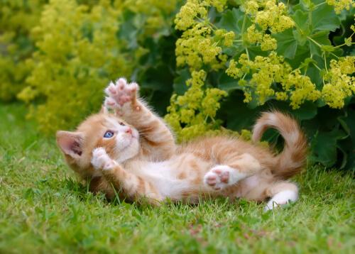 Para qué sirven las garras del gato