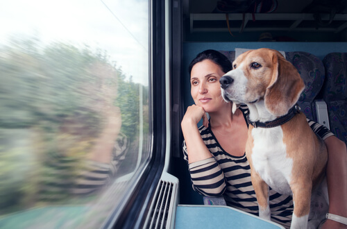 Perro en el tren