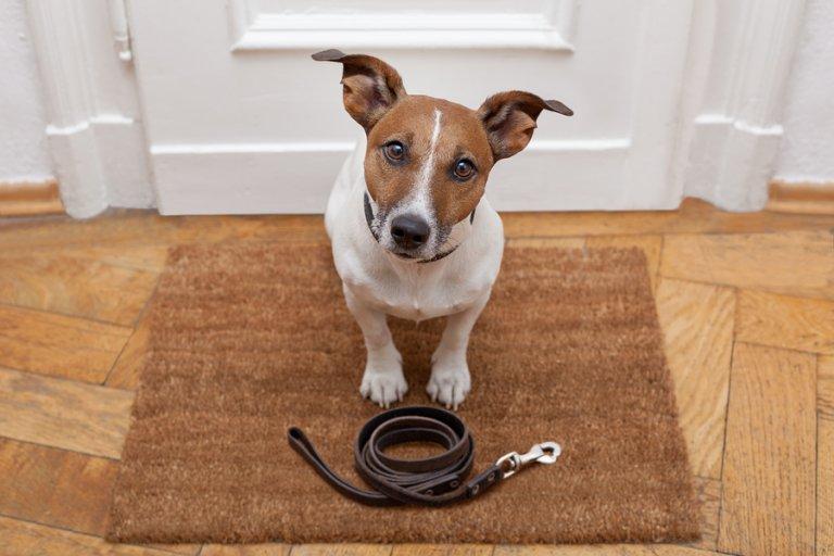 4 consecuencias de no sacar a pasear a los perros