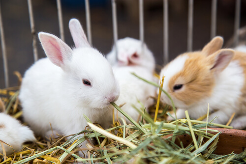 Las plantas que le puedo dar a mi conejo