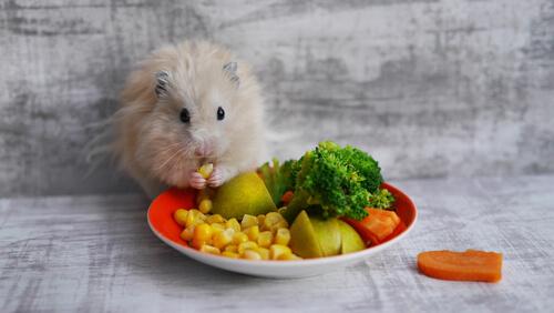 Qué golosinas dar a los roedores