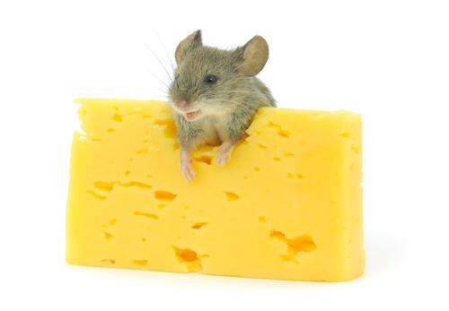 Queso para roedores
