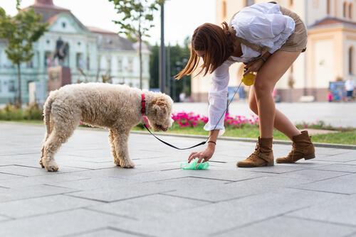 Recoger excrementos del perro