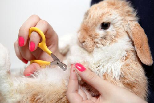 Recortar garras al conejo