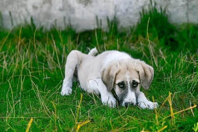 Restaurar el equilibrio intestinal de mi perro o gato