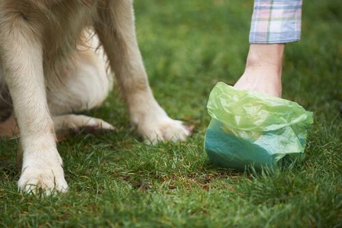 Salmonella en perros