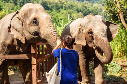 Cómo saber si un santuario de fauna es falso