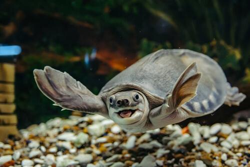 Los cuidados de una tortuga de agua