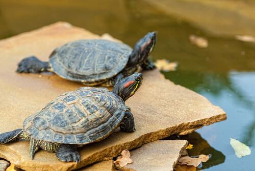 Tortugas en tierra